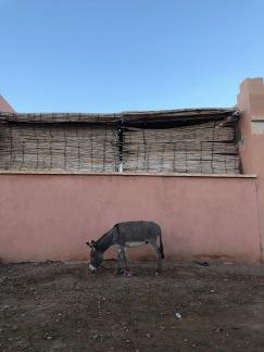 Random loose donkey on the way home from Dar Chebab
